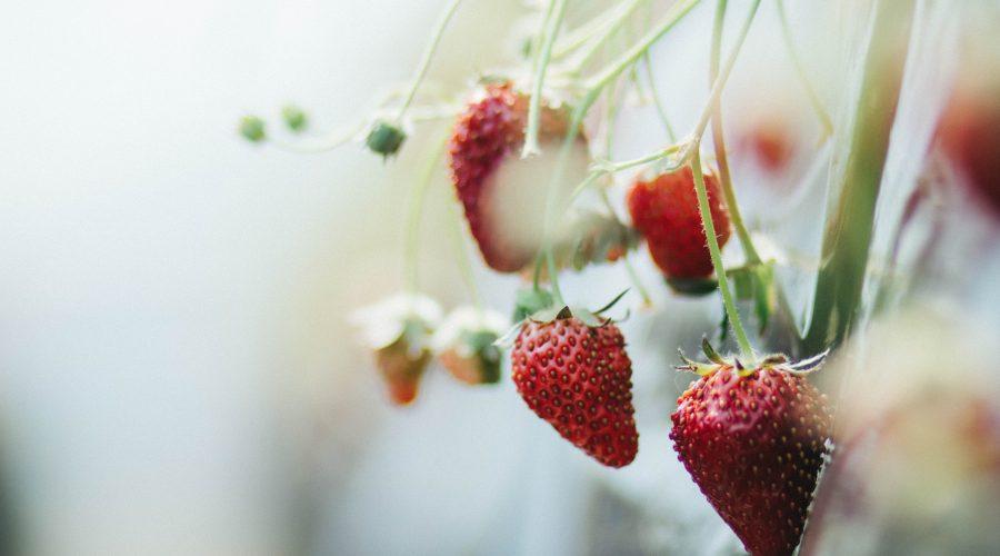 Midsommar är här – 5 hälsofördelar med att äta jordgubbar