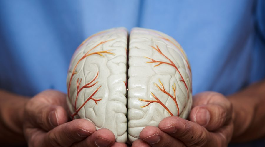 Hjärnan – en väl integrerad del av vår kropp